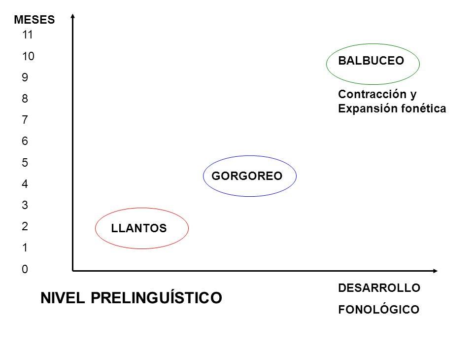 MESES DESARROLLO FONOLÓGICO 11 10 9 8 7 6 5 4 3 2 1 0 NIVEL PRELINGUÍSTICO LLANTOS GORGOREO BALBUCEO Contracción y Expansión fonética