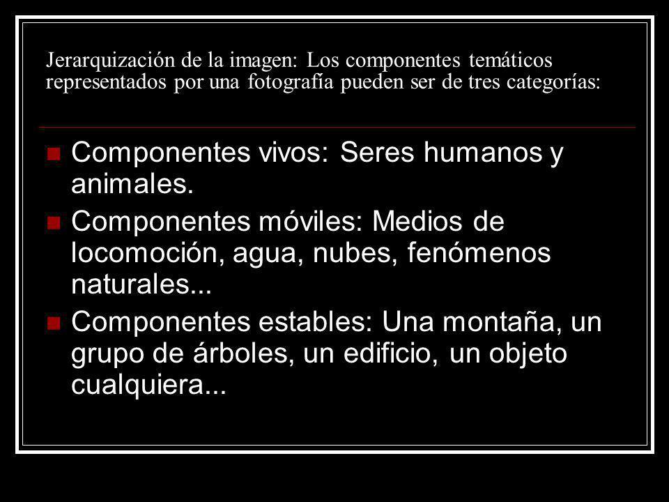 Jerarquización de la imagen: Los componentes temáticos representados por una fotografía pueden ser de tres categorías: Componentes vivos: Seres humano