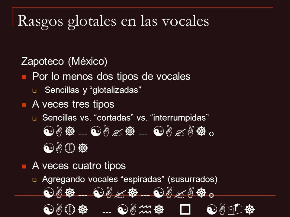 Rasgos glotales en las vocales Zapoteco (México) Por lo menos dos tipos de vocales Sencillas y glotalizadas A veces tres tipos Sencillas vs. cortadas