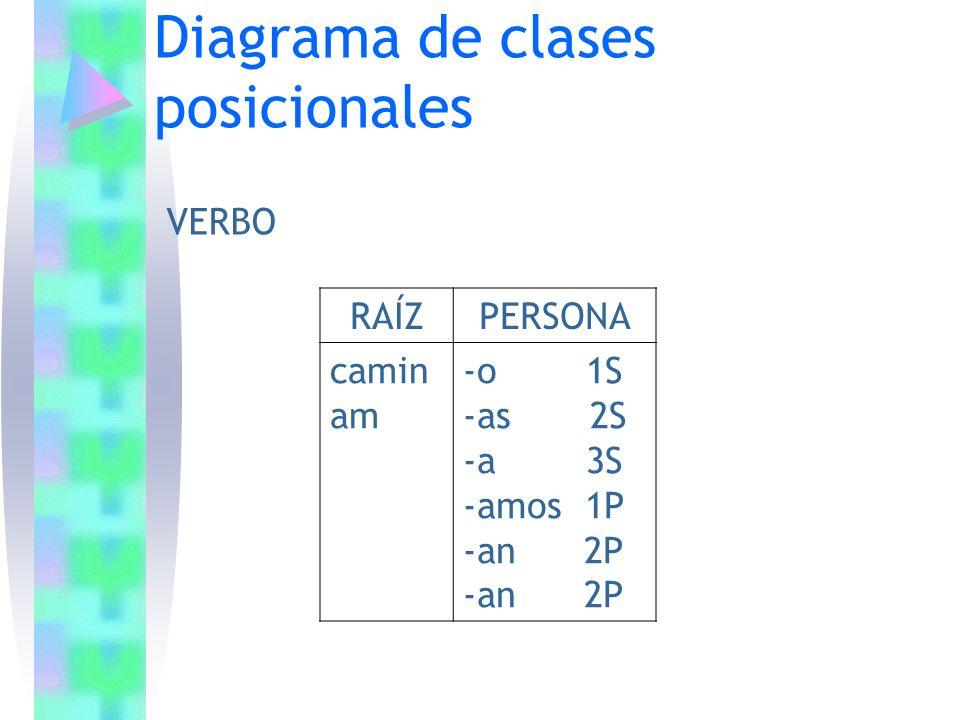Diagrama de clases posicionales RAÍZPERSONA camin am -o 1S -as 2S -a 3S -amos 1P -an 2P VERBO