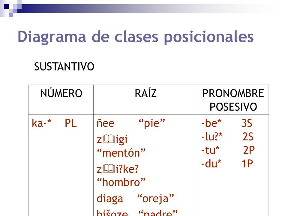 Diagrama de clases posicionales NÚMERORAÍZPRONOMBRE POSESIVO ka-* PLñee pie z igi mentón z i?ke? hombro diaga oreja bišoze padre -be* 3S -lu?* 2S -tu*