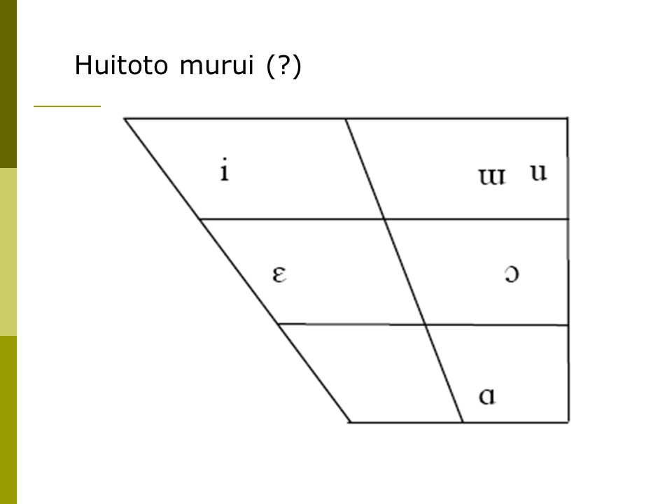 Huitoto murui (?)