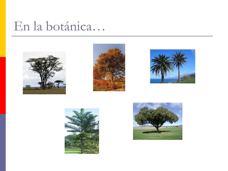 En la botánica…