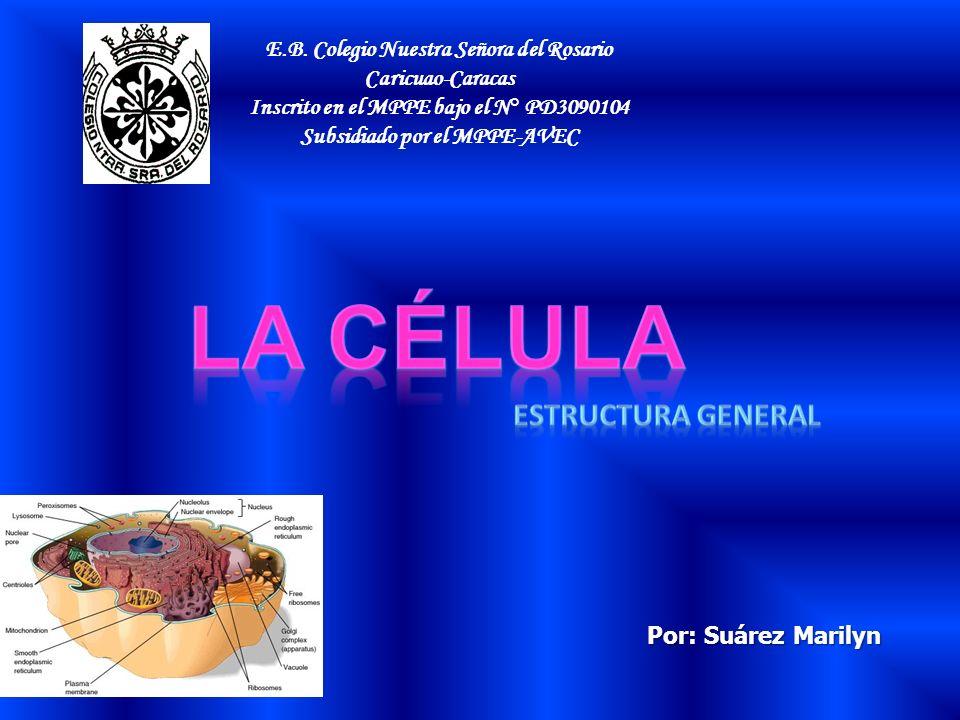 E.B. Colegio Nuestra Señora del Rosario Caricuao-Caracas Inscrito en el MPPE bajo el N° PD3090104 Subsidiado por el MPPE-AVEC Por: Suárez Marilyn