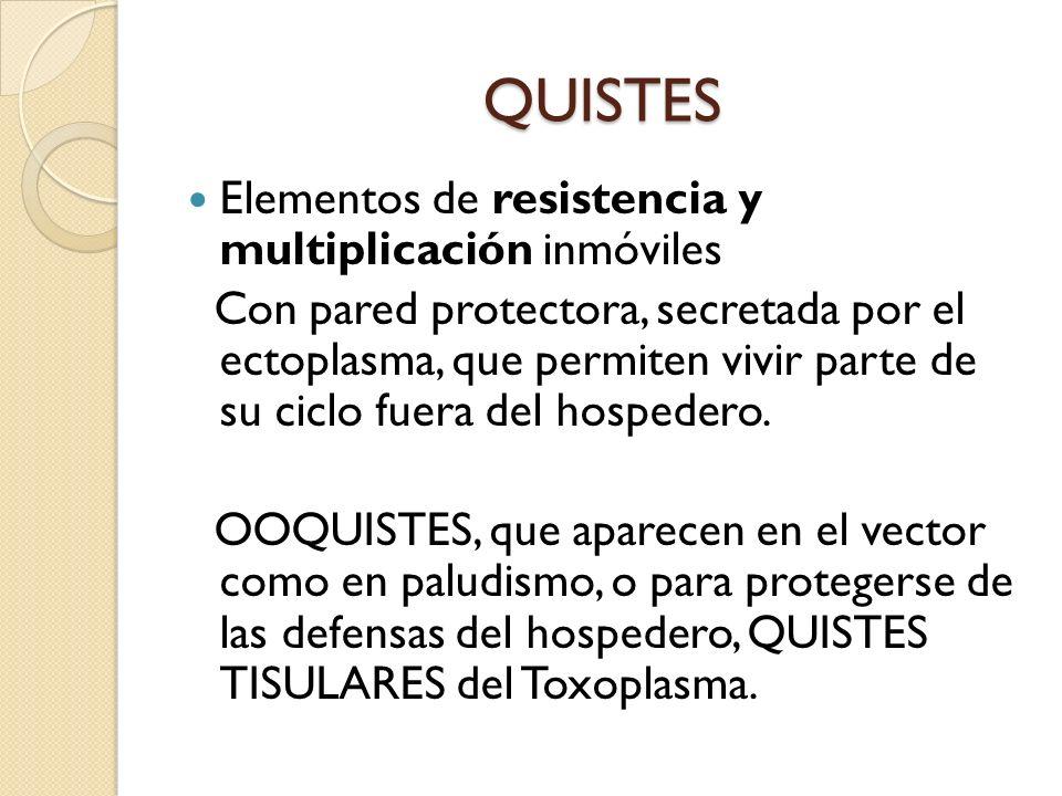 QUISTES Elementos de resistencia y multiplicación inmóviles Con pared protectora, secretada por el ectoplasma, que permiten vivir parte de su ciclo fu
