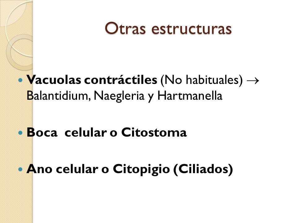 Otras estructuras Vacuolas contráctiles (No habituales) Balantidium, Naegleria y Hartmanella Boca celular o Citostoma Ano celular o Citopigio (Ciliado
