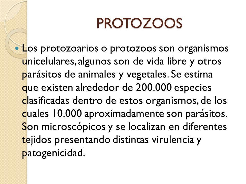 PROTOZOOS Los protozoarios o protozoos son organismos unicelulares, algunos son de vida libre y otros parásitos de animales y vegetales. Se estima que