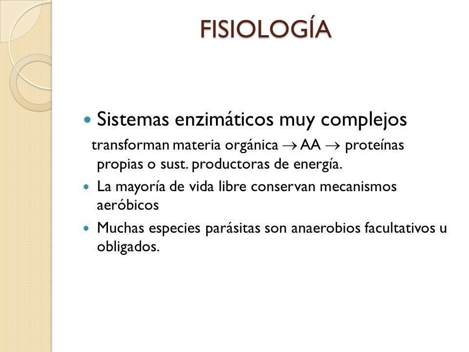 FISIOLOGÍA Sistemas enzimáticos muy complejos transforman materia orgánica AA proteínas propias o sust. productoras de energía. La mayoría de vida lib