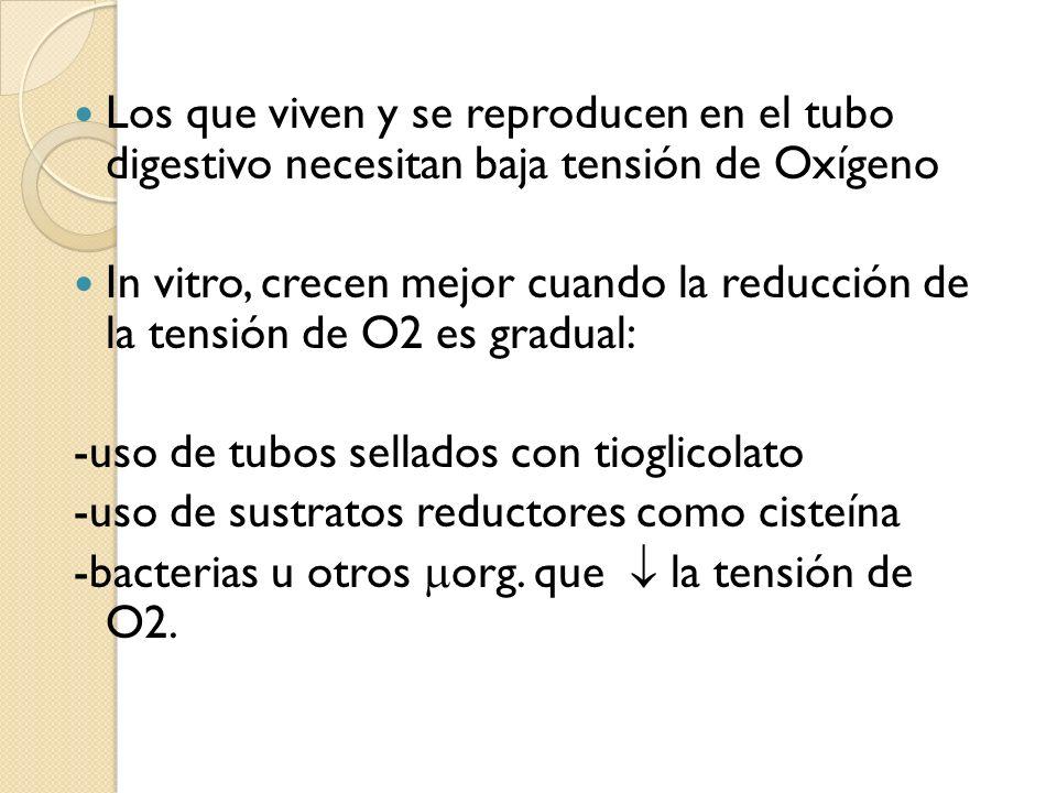 Los que viven y se reproducen en el tubo digestivo necesitan baja tensión de Oxígeno In vitro, crecen mejor cuando la reducción de la tensión de O2 es
