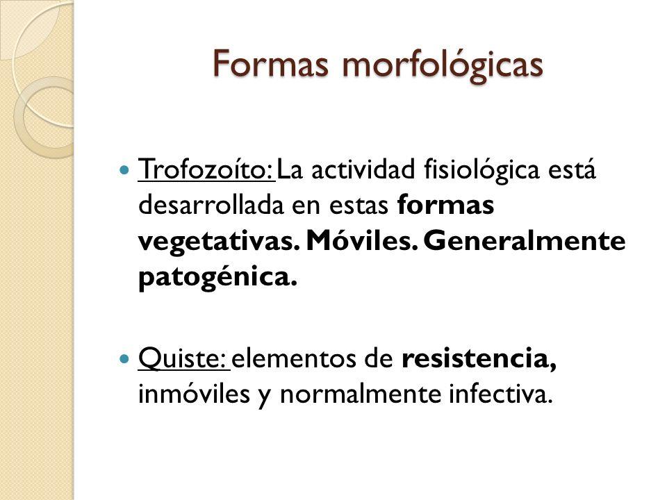 Formas morfológicas Trofozoíto: La actividad fisiológica está desarrollada en estas formas vegetativas. Móviles. Generalmente patogénica. Quiste: elem