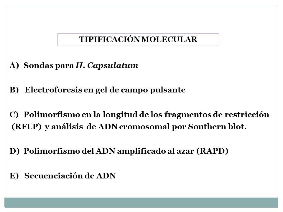 TIPIFICACIÓN MOLECULAR A)Sondas para H. Capsulatum B) Electroforesis en gel de campo pulsante C)Polimorfismo en la longitud de los fragmentos de restr