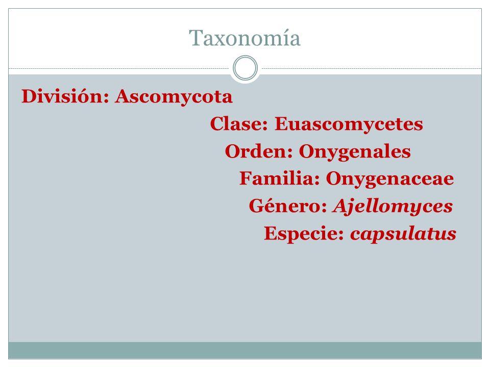 Taxonomía División: Ascomycota Clase: Euascomycetes Orden: Onygenales Familia: Onygenaceae Género: Ajellomyces Especie: capsulatus