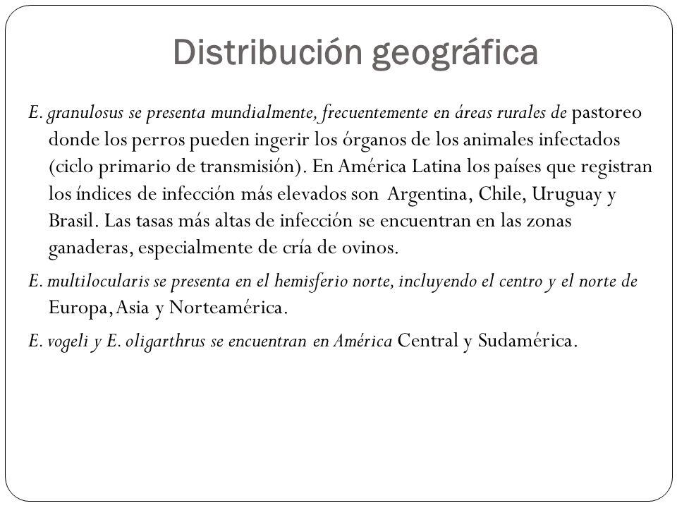 Distribución geográfica E. granulosus se presenta mundialmente, frecuentemente en áreas rurales de pastoreo donde los perros pueden ingerir los órgano