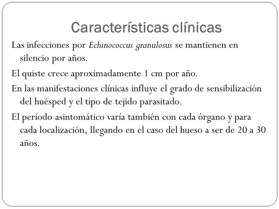 Características clínicas Las infecciones por Echinococcus granulosus se mantienen en silencio por años. El quiste crece aproximadamente 1 cm por año.