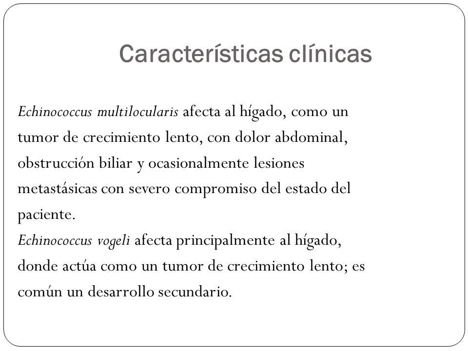 Características clínicas Echinococcus multilocularis afecta al hígado, como un tumor de crecimiento lento, con dolor abdominal, obstrucción biliar y o