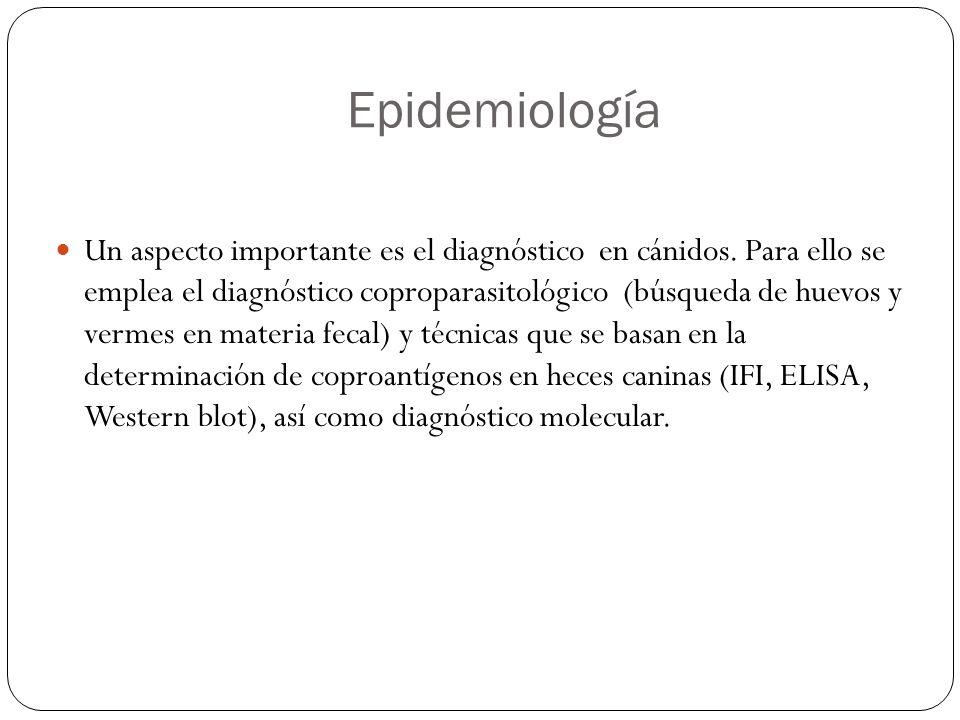 Epidemiología Un aspecto importante es el diagnóstico en cánidos. Para ello se emplea el diagnóstico coproparasitológico (búsqueda de huevos y vermes