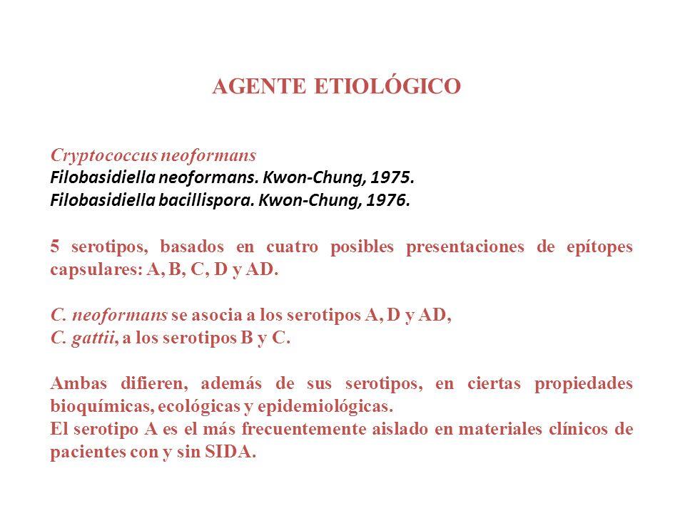 AGENTE ETIOLÓGICO Cryptococcus neoformans Filobasidiella neoformans. Kwon-Chung, 1975. Filobasidiella bacillispora. Kwon-Chung, 1976. 5 serotipos, bas