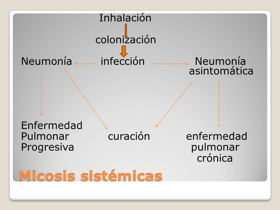 Micosis sistémicas Inhalación colonización Neumonía infección Neumonía asintomática Enfermedad Pulmonar curación enfermedad Progresiva pulmonar crónic