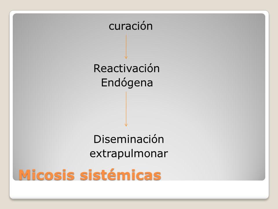 Micosis sistémicas curación Reactivación Endógena Diseminación extrapulmonar