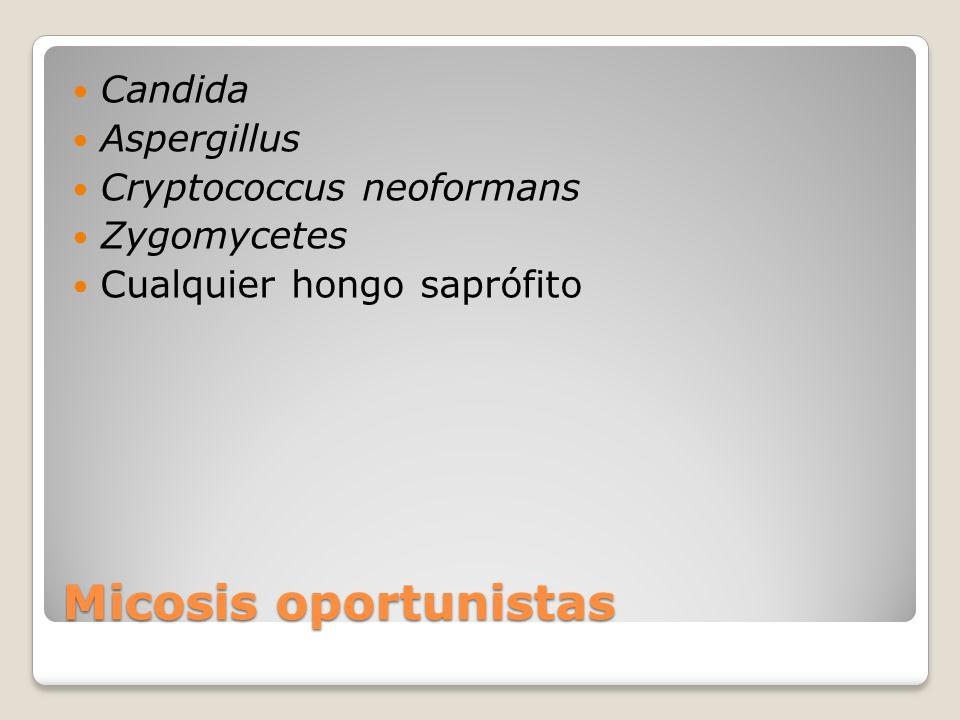 Micosis oportunistas Candida Aspergillus Cryptococcus neoformans Zygomycetes Cualquier hongo saprófito