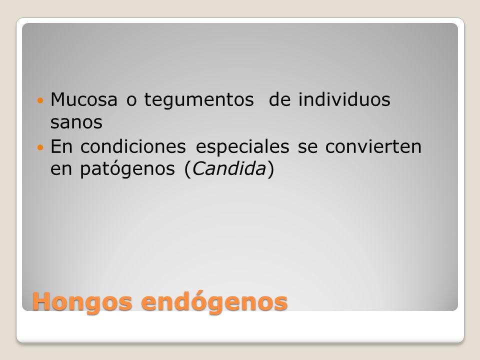 Hongos endógenos Mucosa o tegumentos de individuos sanos En condiciones especiales se convierten en patógenos (Candida)