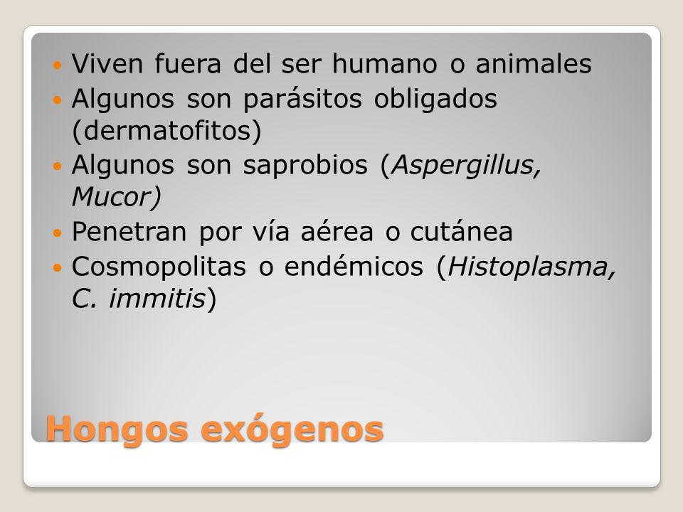 Hongos exógenos Viven fuera del ser humano o animales Algunos son parásitos obligados (dermatofitos) Algunos son saprobios (Aspergillus, Mucor) Penetr