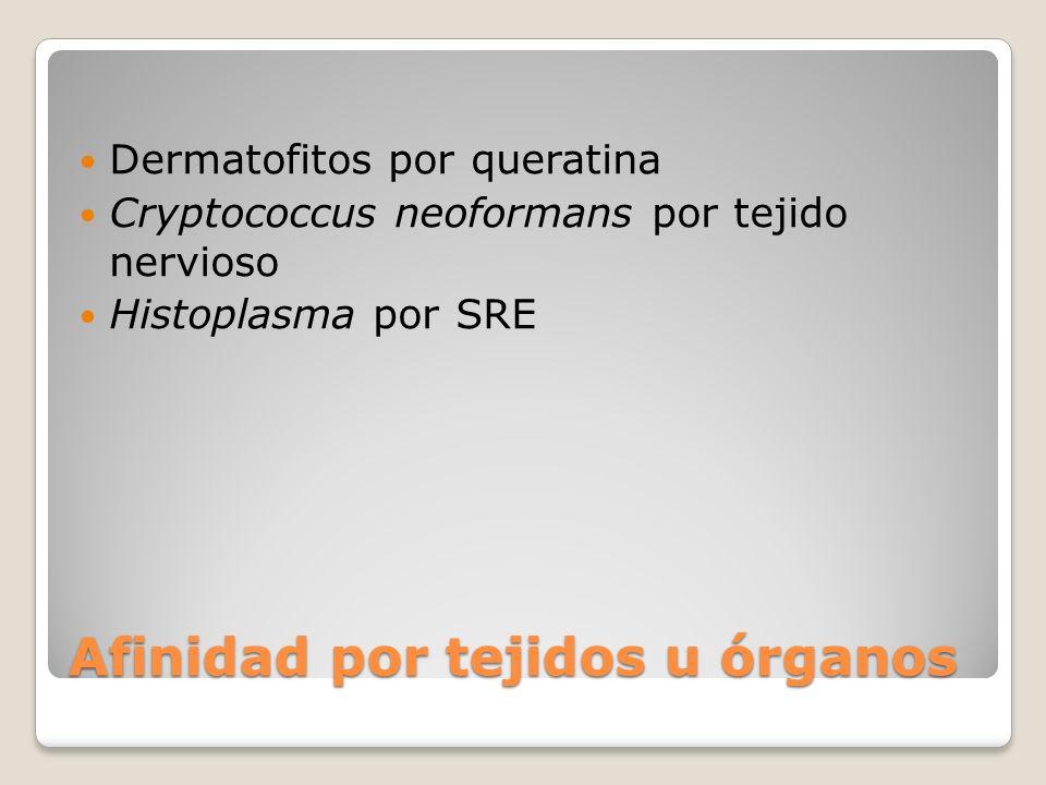 Afinidad por tejidos u órganos Dermatofitos por queratina Cryptococcus neoformans por tejido nervioso Histoplasma por SRE