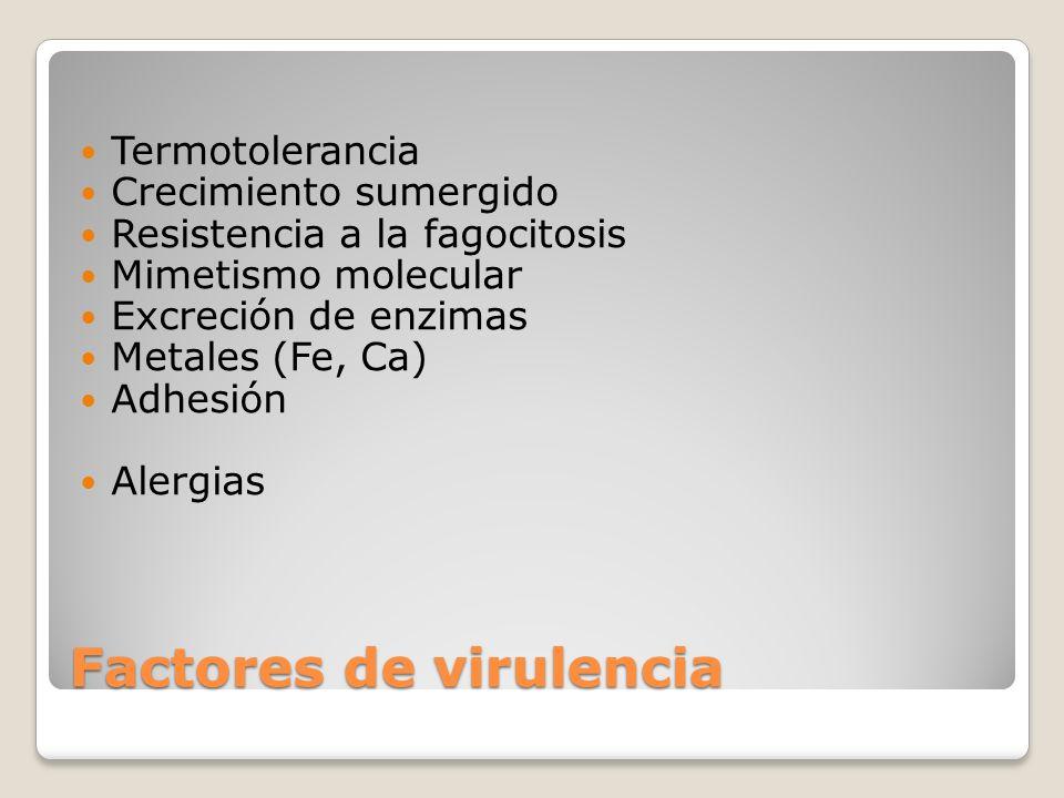 Factores de virulencia Termotolerancia Crecimiento sumergido Resistencia a la fagocitosis Mimetismo molecular Excreción de enzimas Metales (Fe, Ca) Ad