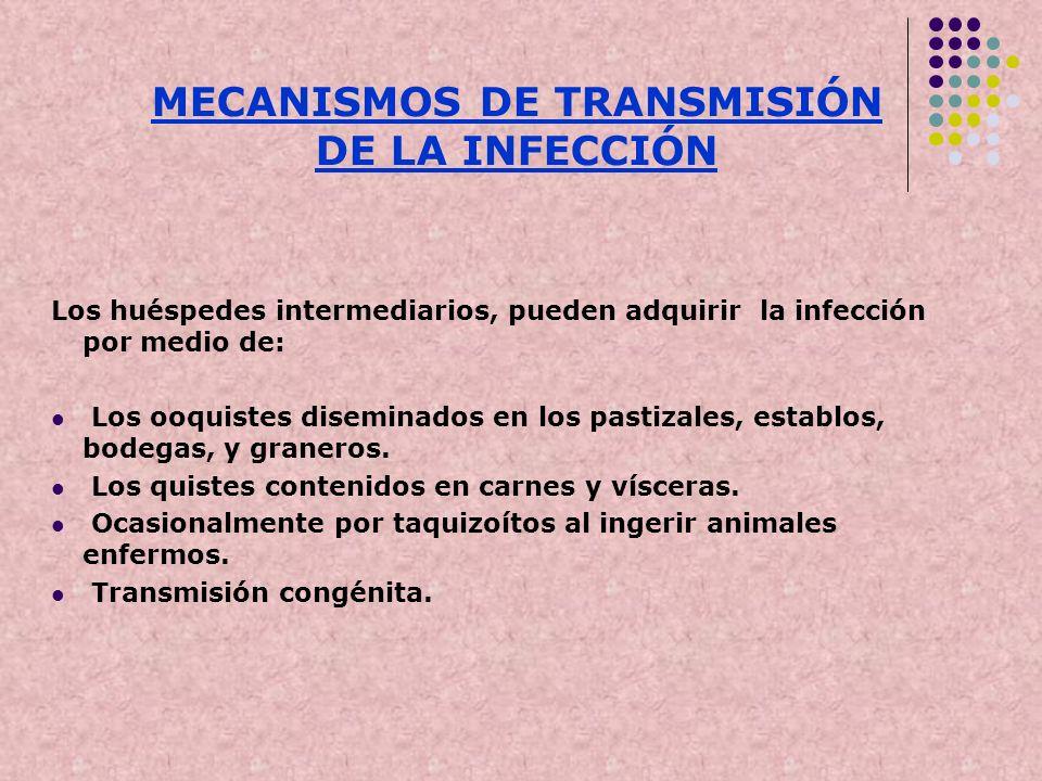 Los huéspedes intermediarios, pueden adquirir la infección por medio de: Los ooquistes diseminados en los pastizales, establos, bodegas, y graneros. L