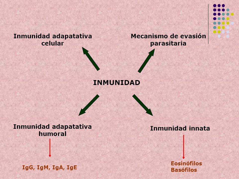 INMUNIDAD Mecanismo de evasión parasitaria Inmunidad innata Inmunidad adapatativa celular Inmunidad adapatativa humoral Eosinófilos Basófilos IgG, IgM