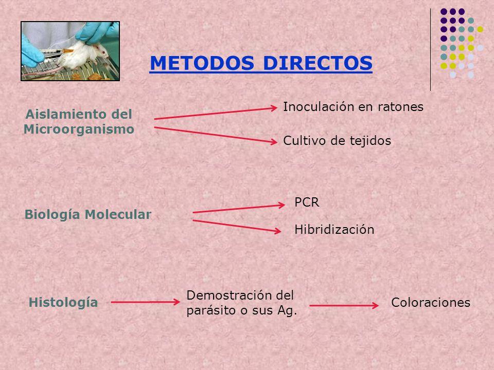 METODOS DIRECTOS Aislamiento del Microorganismo Inoculación en ratones Cultivo de tejidos Biología Molecular PCR Hibridización Histología Demostración