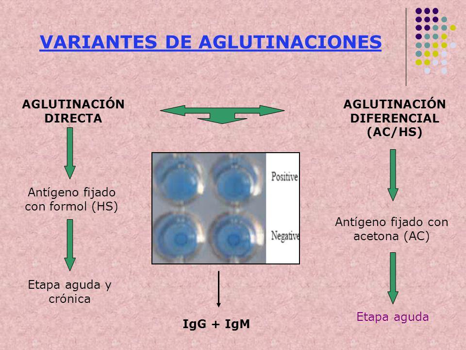 AGLUTINACIÓN DIRECTA AGLUTINACIÓN DIFERENCIAL (AC/HS) Antígeno fijado con formol (HS) Antígeno fijado con acetona (AC) Etapa aguda Etapa aguda y cróni