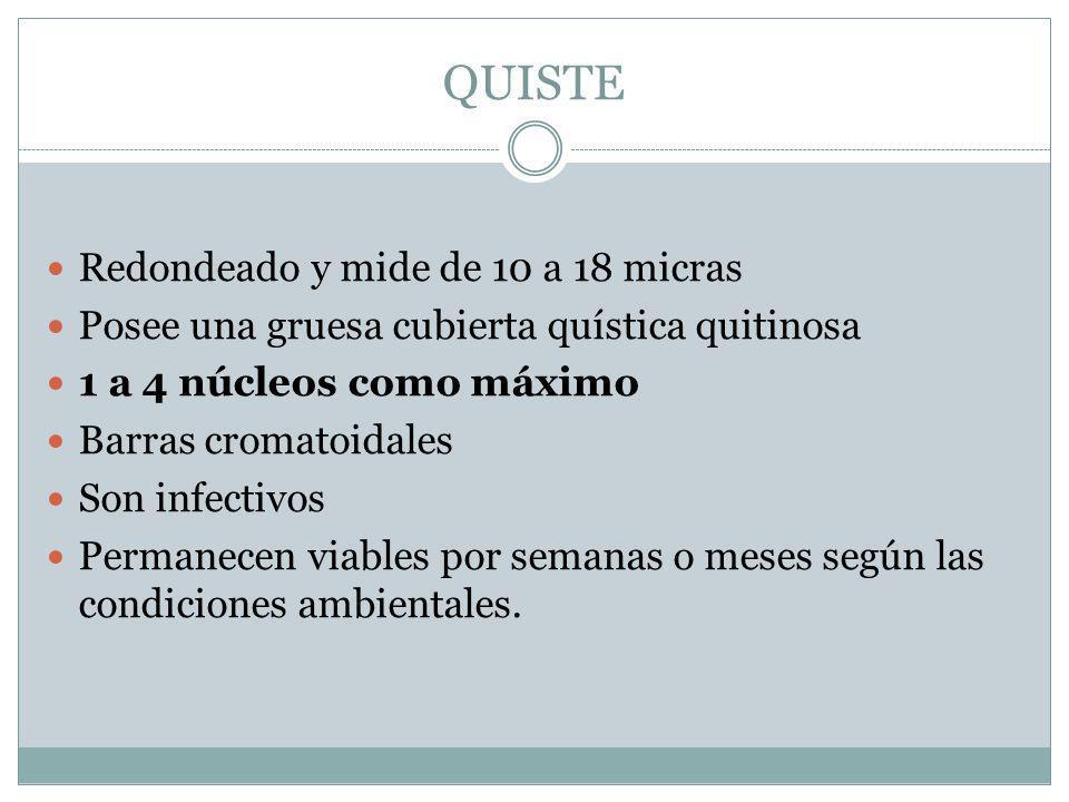 QUISTE Redondeado y mide de 10 a 18 micras Posee una gruesa cubierta quística quitinosa 1 a 4 núcleos como máximo Barras cromatoidales Son infectivos