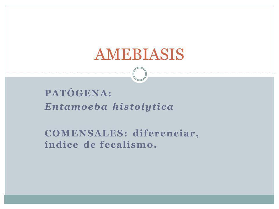 PATÓGENA: Entamoeba histolytica COMENSALES: diferenciar, índice de fecalismo. AMEBIASIS