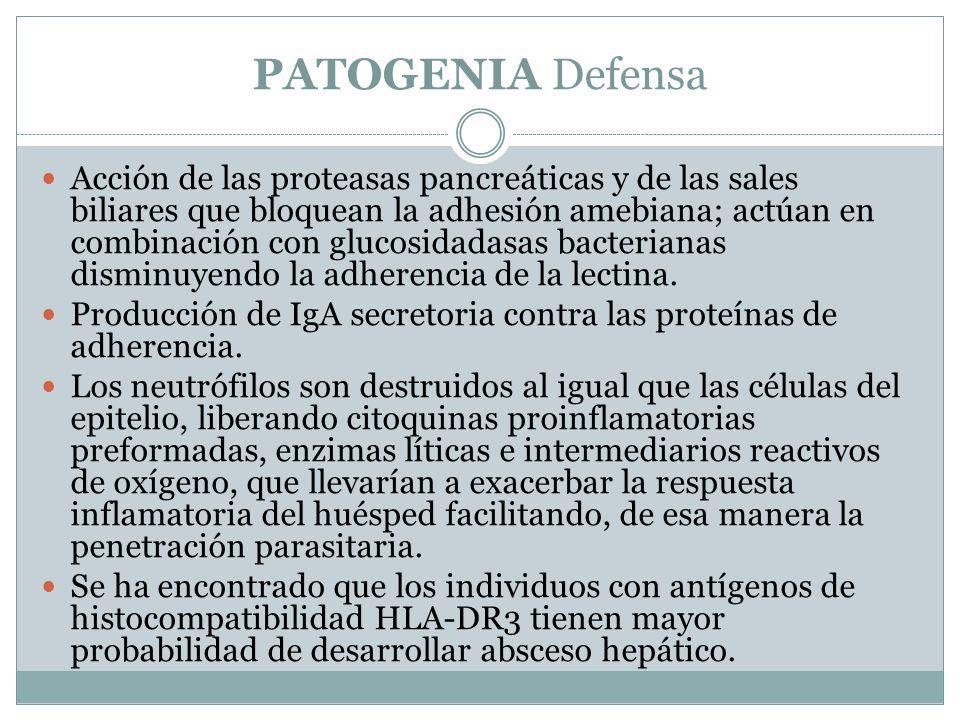 PATOGENIA Defensa Acción de las proteasas pancreáticas y de las sales biliares que bloquean la adhesión amebiana; actúan en combinación con glucosidad