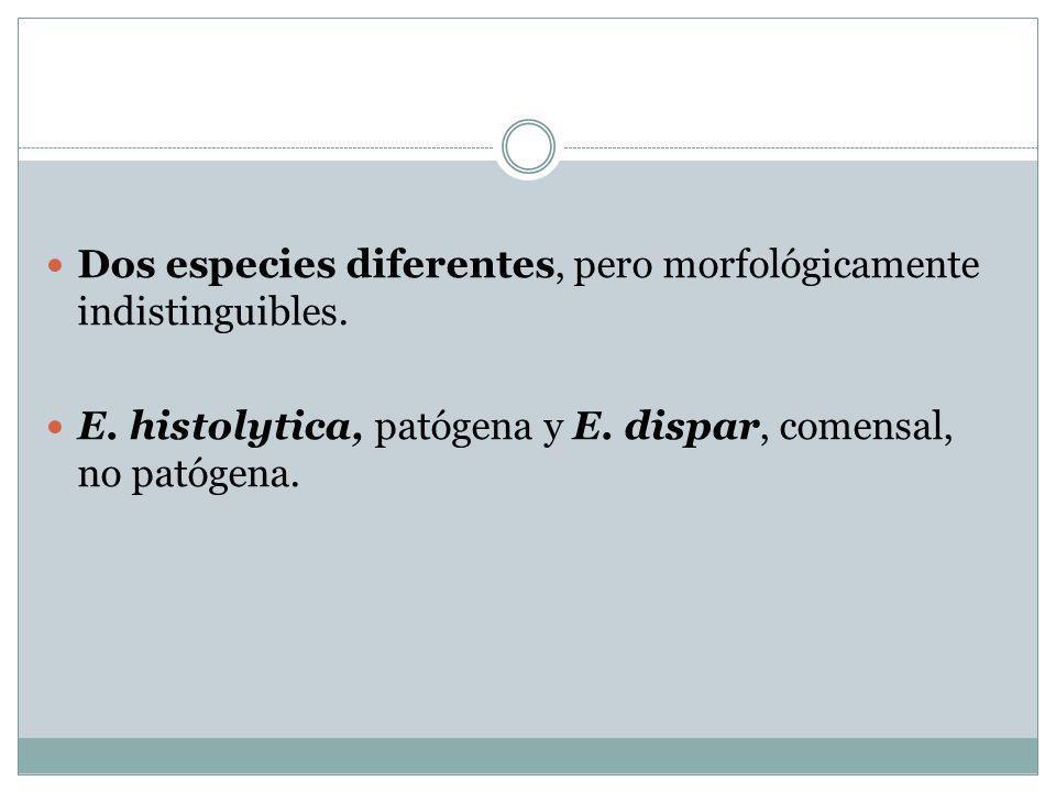 Dos especies diferentes, pero morfológicamente indistinguibles. E. histolytica, patógena y E. dispar, comensal, no patógena.