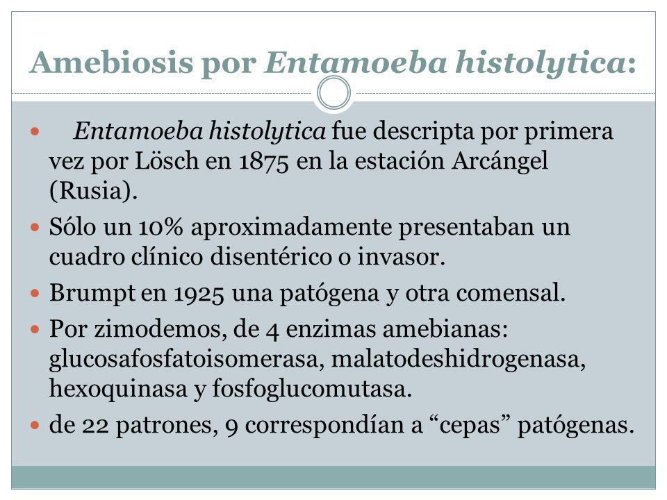 Amebiosis por Entamoeba histolytica: Entamoeba histolytica fue descripta por primera vez por Lösch en 1875 en la estación Arcángel (Rusia). Sólo un 10