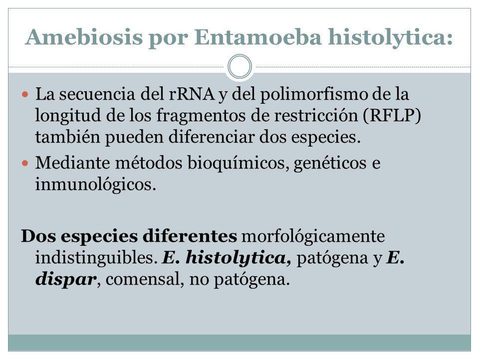 Amebiosis por Entamoeba histolytica: La secuencia del rRNA y del polimorfismo de la longitud de los fragmentos de restricción (RFLP) también pueden di