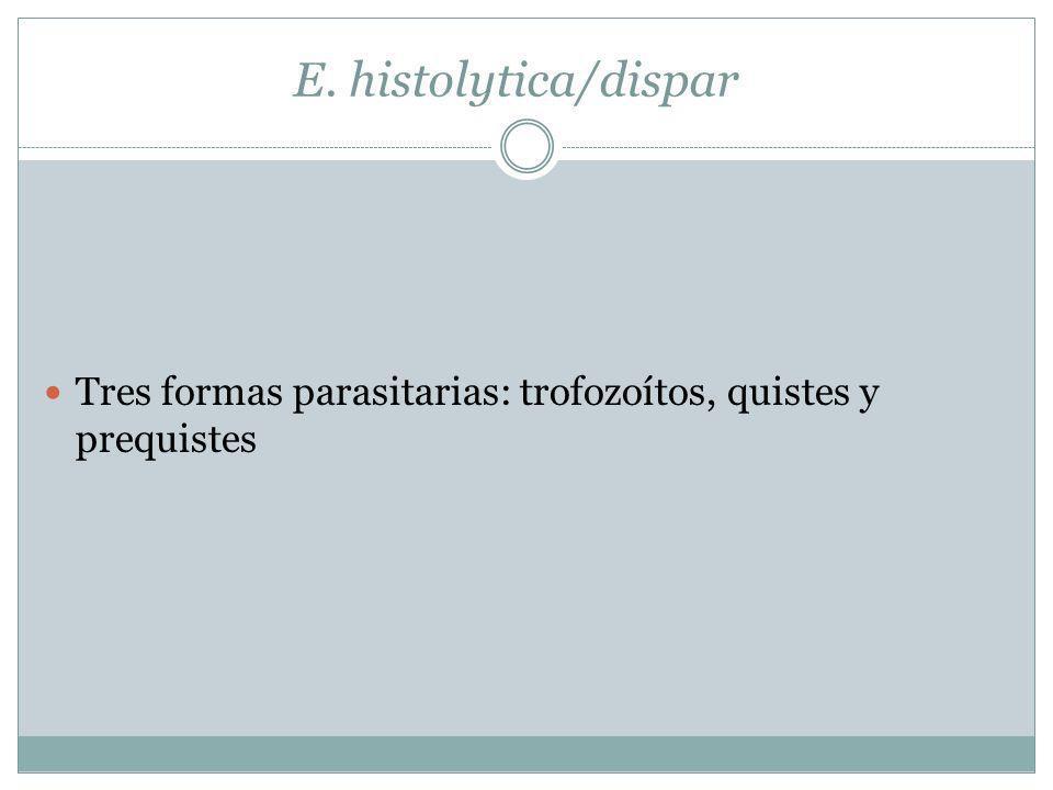 E. histolytica/dispar Tres formas parasitarias: trofozoítos, quistes y prequistes