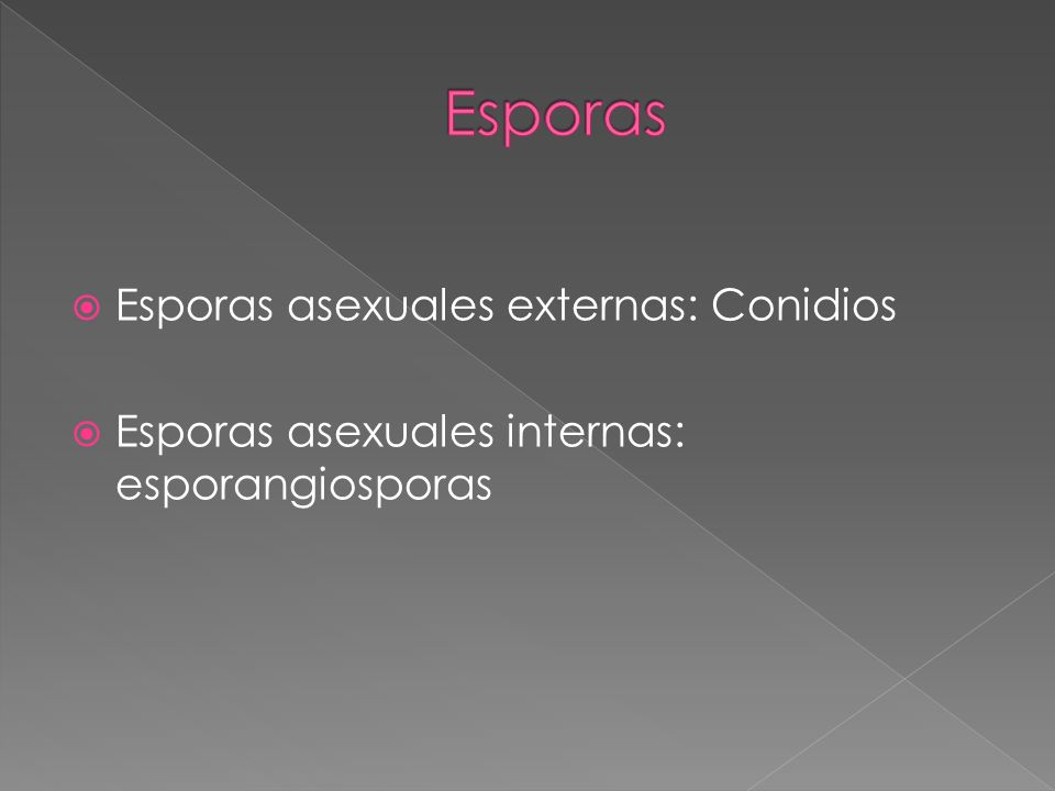 Esporas asexuales externas: Conidios Esporas asexuales internas: esporangiosporas
