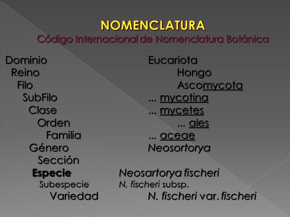 DominioEucariota ReinoHongo ReinoHongo FiloAscomycota FiloAscomycota SubFilo... mycotina SubFilo... mycotina Clase... mycetes Clase... mycetes Orden..