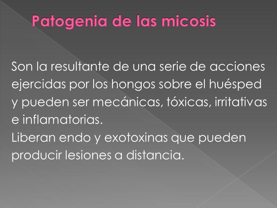 Son la resultante de una serie de acciones ejercidas por los hongos sobre el huésped y pueden ser mecánicas, tóxicas, irritativas e inflamatorias. Lib