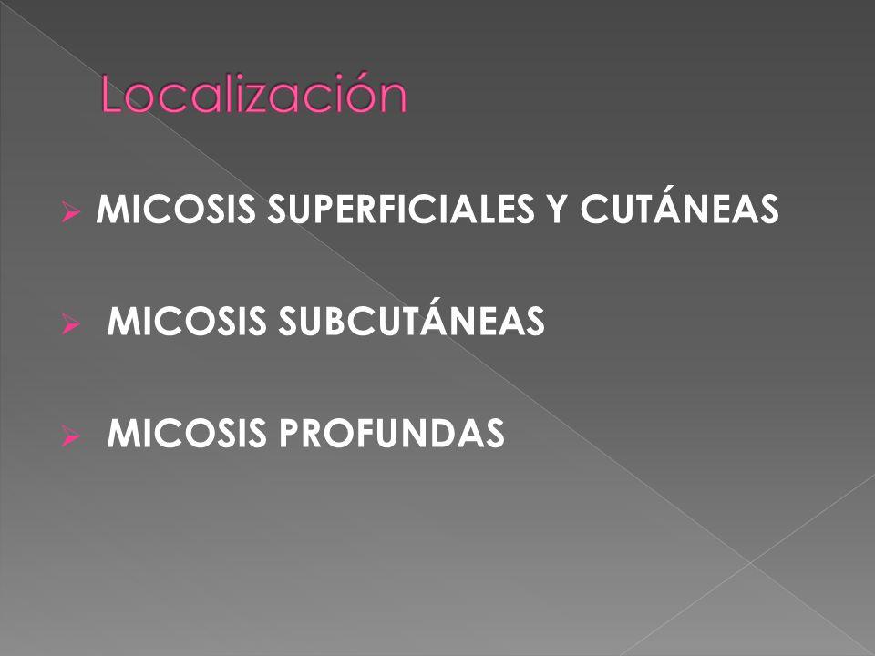 MICOSIS SUPERFICIALES Y CUTÁNEAS MICOSIS SUBCUTÁNEAS MICOSIS PROFUNDAS