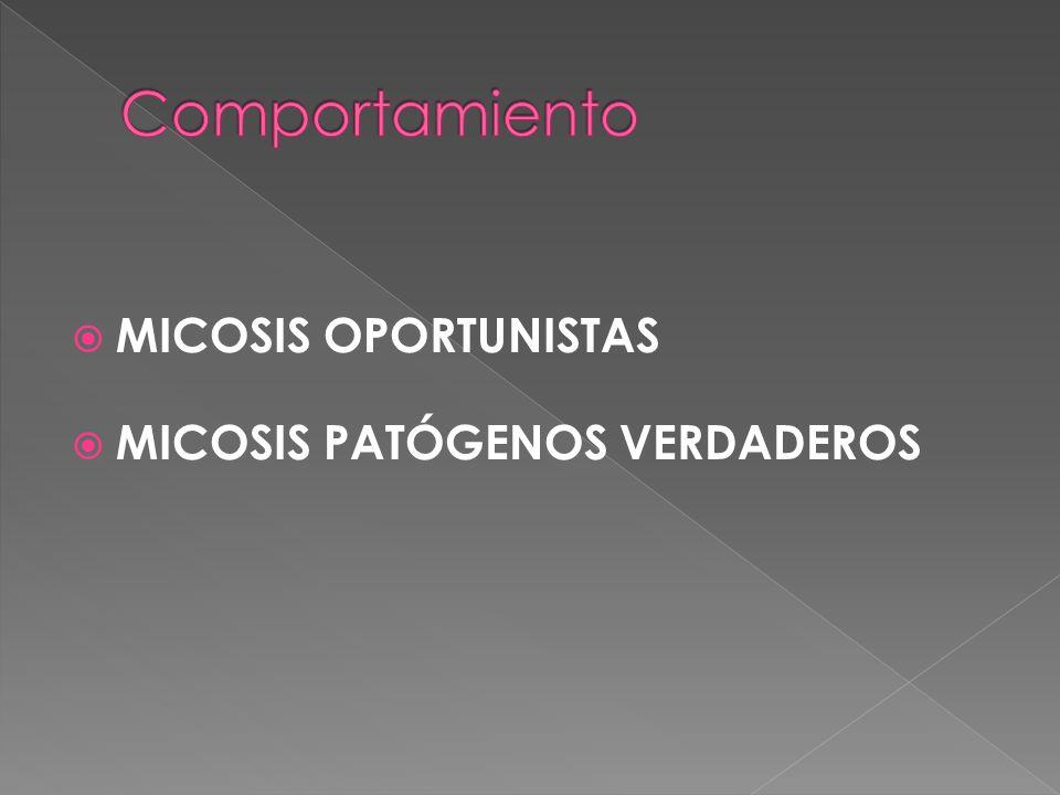 MICOSIS OPORTUNISTAS MICOSIS PATÓGENOS VERDADEROS