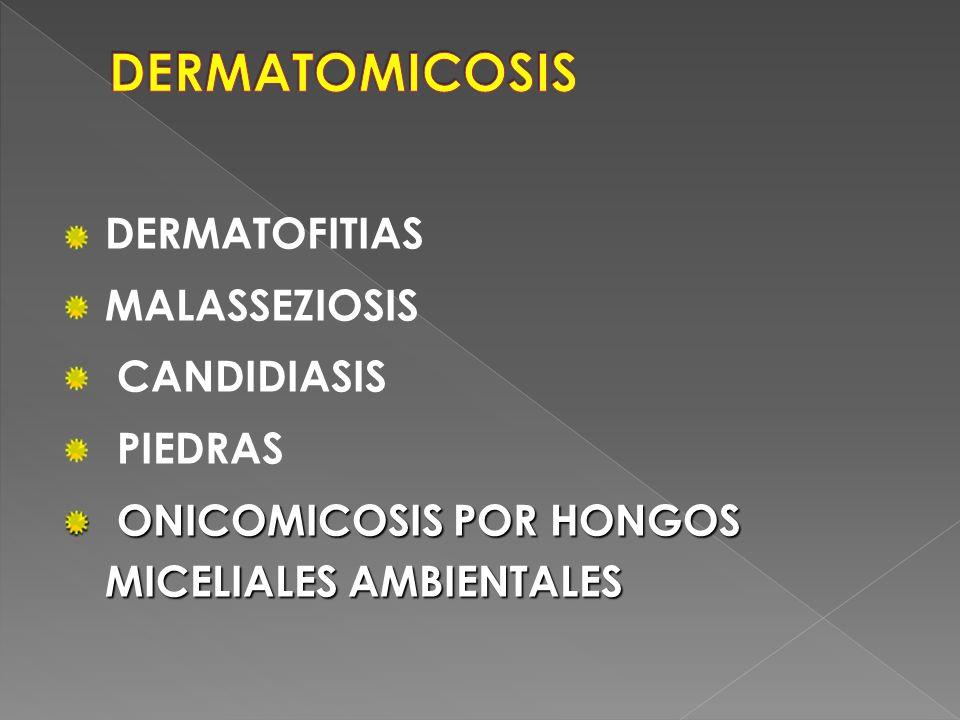 DERMATOFITIAS MALASSEZIOSIS CANDIDIASIS PIEDRAS ONICOMICOSIS POR HONGOS MICELIALES AMBIENTALES ONICOMICOSIS POR HONGOS MICELIALES AMBIENTALES
