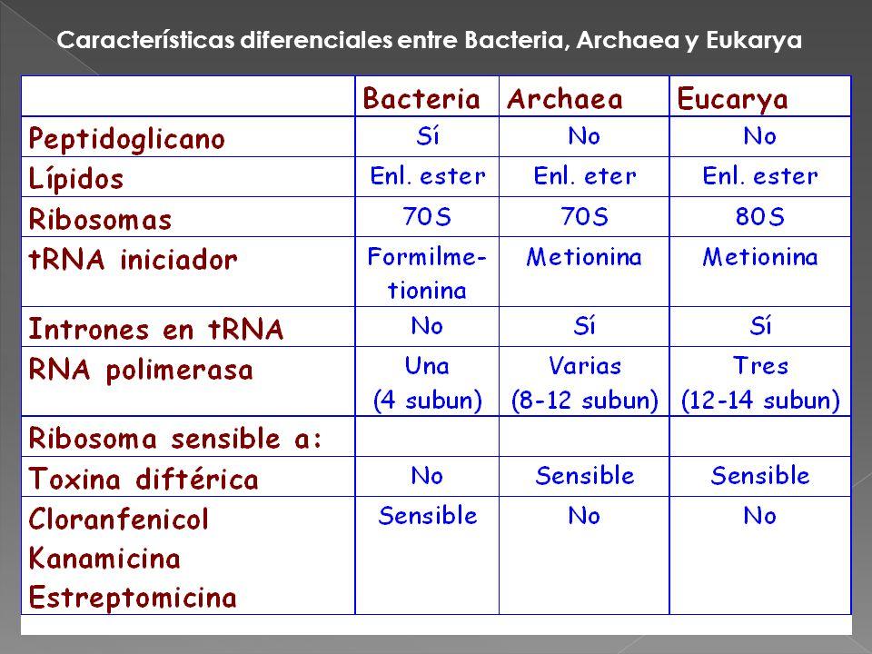 Características diferenciales entre Bacteria, Archaea y Eukarya