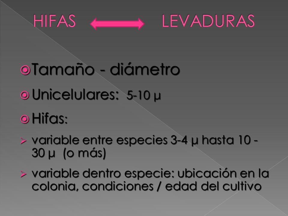 Tamaño - diámetro Tamaño - diámetro Unicelulares: 5-10 μ Unicelulares: 5-10 μ Hifas : Hifas : variable entre especies 3-4 μ hasta 10 - 30 μ(o más) var