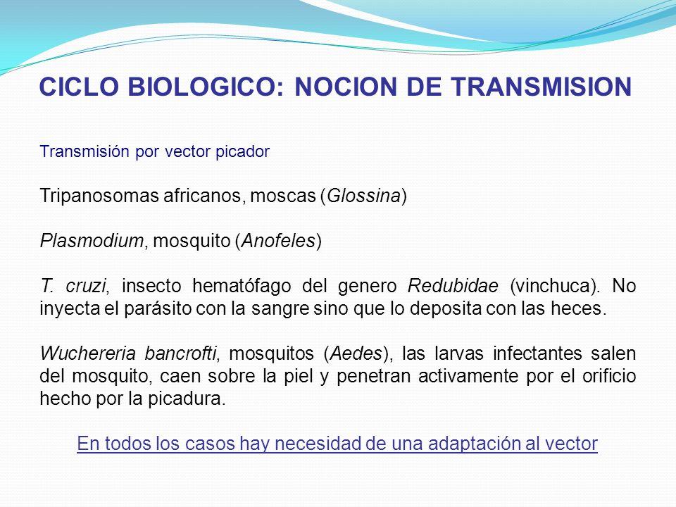 Transmisión por vector picador Tripanosomas africanos, moscas (Glossina) Plasmodium, mosquito (Anofeles) T. cruzi, insecto hematófago del genero Redub