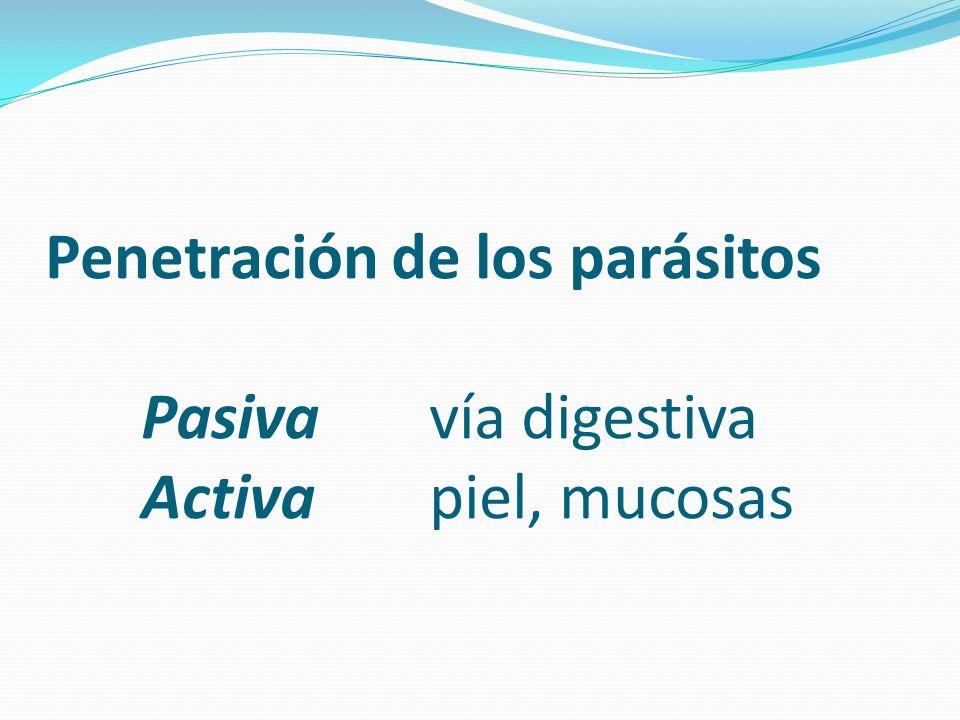 Penetración de los parásitos Pasivavía digestiva Activapiel, mucosas