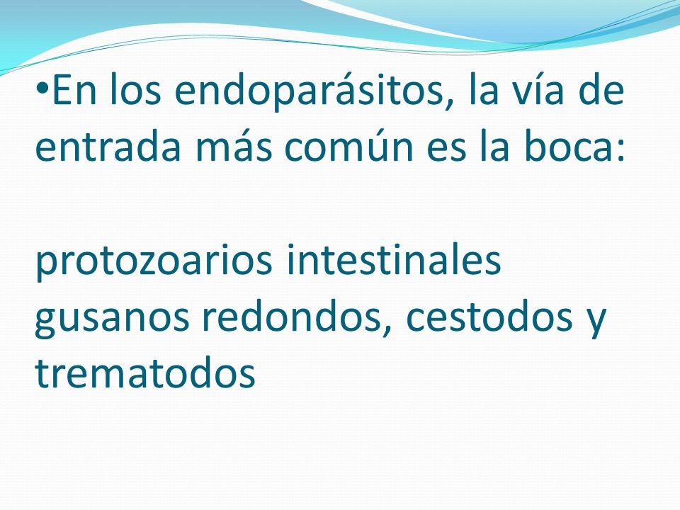 En los endoparásitos, la vía de entrada más común es la boca: protozoarios intestinales gusanos redondos, cestodos y trematodos